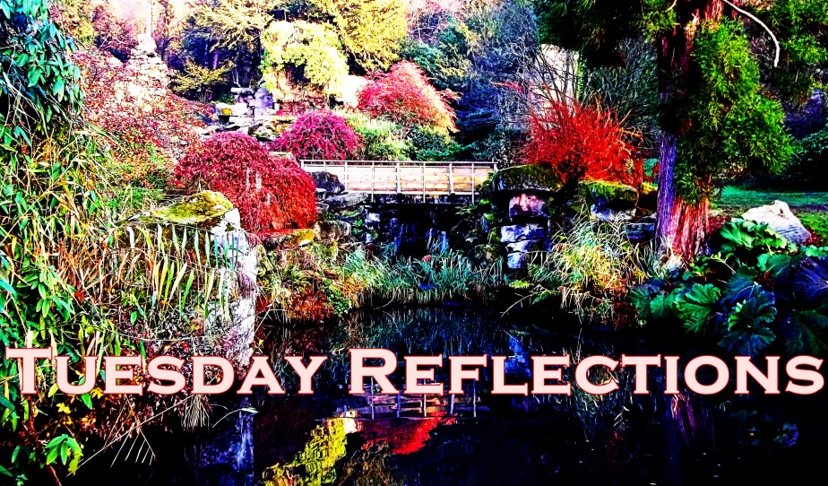 Tuesday Reflections