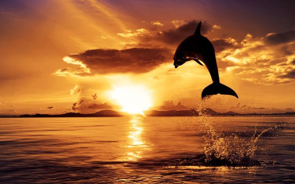 Dolphin-Sunset-HD-Wallpaper