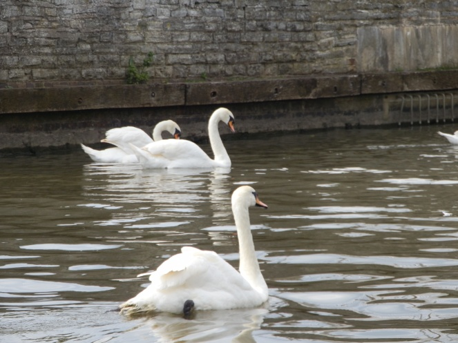 And Swans