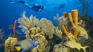 belize-coral-reef_966x543