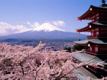 Cherry-Blossoms-And-Mount-Fuji-Japan-1-1600x1200
