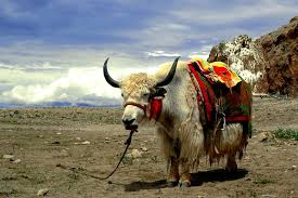 T is for Tibet - Places I Dream of Seeing! (6/6)