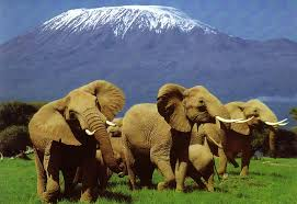 K is for Kenya - Places I Dream of Seeing! (4/6)