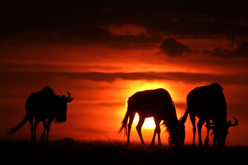 K is for Kenya - Places I Dream of Seeing! (6/6)